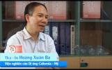 Hồng Mạch Khang - Xua tan huyết áp thấp